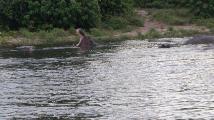 rio Chobe